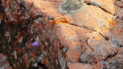 Purple Flower Blowing in the Wind