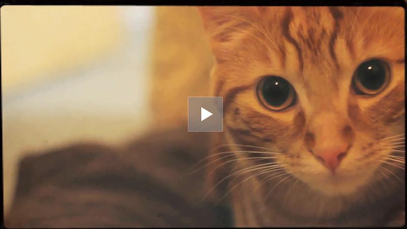 Carys & Ben: Wedding Film  |  Wedding Video  |  Wedding Movie