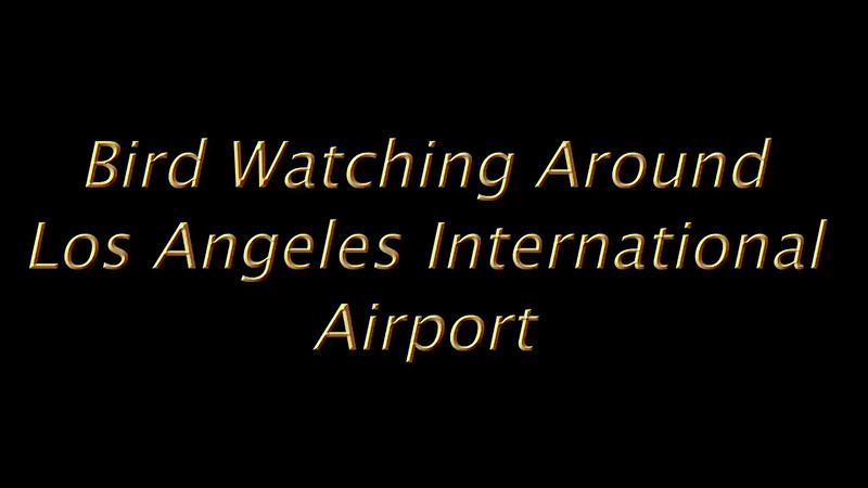 Bird watching around LAX