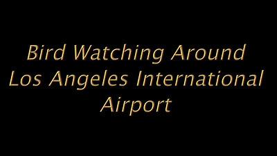 Bird watching around LAX