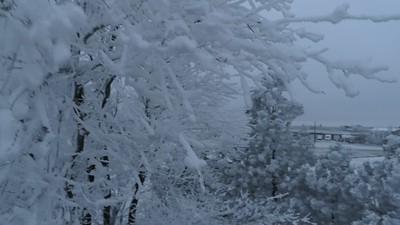 Hoar Frost in Cheyenne