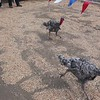 Turkey Race