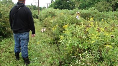 Beagle field trials