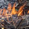 Burning fireweed stalks