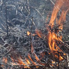 Bushfire burning in a shrubland