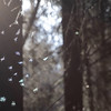 Dancing gnats in a forest