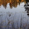 Lake with rushes and reflected trees