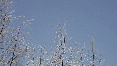 Ice crystals are falling on trees from a blue sky on a very cold winter day