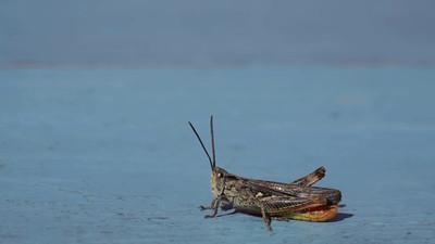 A grasshopper sits clittering on a wooden bank.