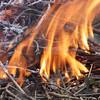 Burning plant stalks in spring