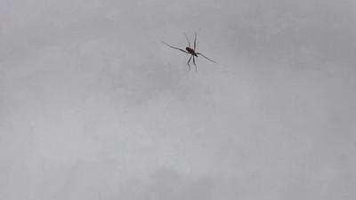 Predatory bug stalking over  fresh snow