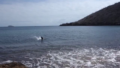 Pelicans, Penguins, Sea Lions Fishing