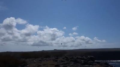 Albatross and Frigatebird