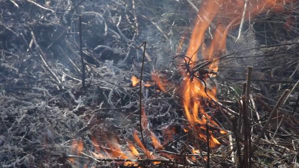 Eld på våren -  Bushfire burning in a shrubland