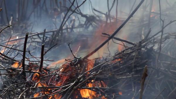 Eld på våren -  Burning twigs