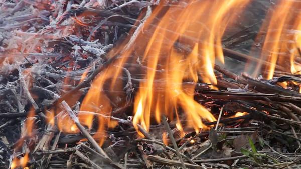 Eld på våren -  Burning plant stalks in spring