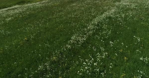 Midsommarlandskap med blomsterängar -  Aerial: flight over a flowering meadow, looking downwards