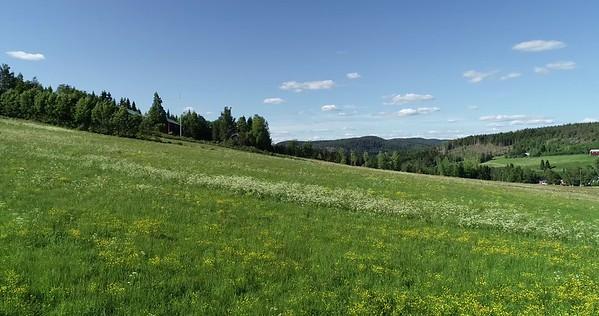 Midsommarlandskap med blomsterängar -  Aerial: low pan over a flowering meadow and a small village in Sweden