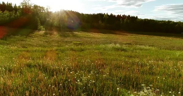 Midsommarlandskap med blomsterängar -  Aerial: flying low over a flowering meadow with dandelion blowballs