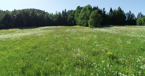 Midsommarlandskap med blomsterängar -  Aerial: flying at low height past a flowering meadow