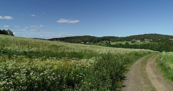 Midsommarlandskap med blomsterängar -  Pov: walking on a track through flowering meadows