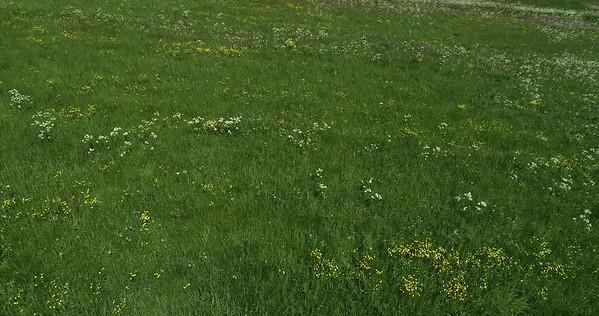 Midsommarlandskap med blomsterängar -  Aerial: tilt from a flowering meadow upwards