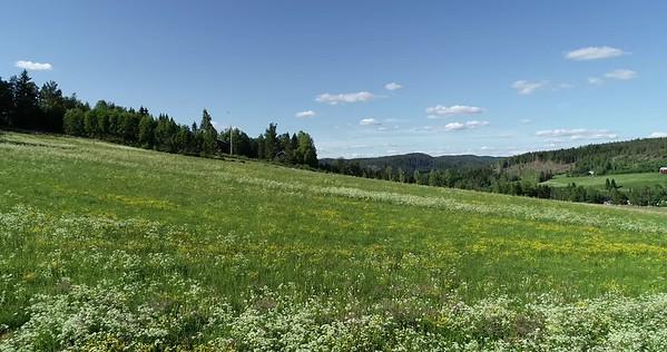Midsommarlandskap med blomsterängar -  Aerial: flying over flowering meadows in spring