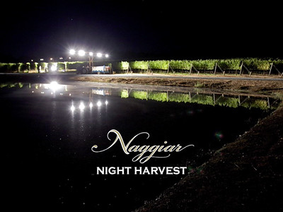Night harvest at Naggiar Vineyards, Grass Valley, California