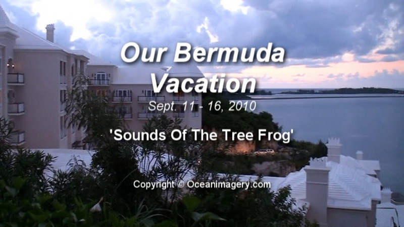 bermuda_treefrogs