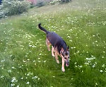 Misty - on a walk over the fields behind the house