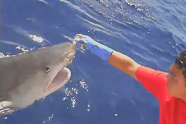 Shark diving on the North Share of Oahu