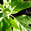 Nevergreen