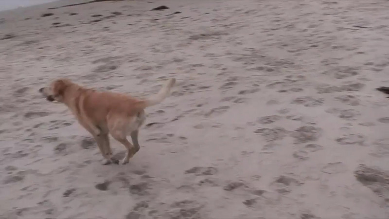 A dog day at the beach