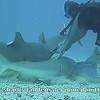Shark Dive with Dive Safaris (2012)