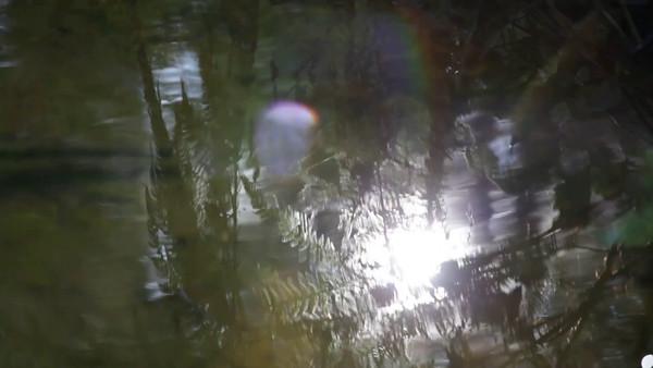 Skogen reflekteras i en bäck på hösten - Creek in autumn: the sun shines through fern eaves and cast their shadows on the