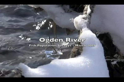 Ogden River Fish Survey  In 2009 DWR Northern Region biologists used a raft for the first time to survey fish populations in the Ogden River through the City of Ogden and found up to 2,000 brown trout per mile.