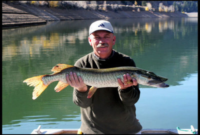 Tiger Muskies return to Pineview Reservoir and other Utah waters  Approximately 10,000 tiger muskies were released back into Pineview Reservoir and other waters throughout the state on July 2, 2009. This is the first time tiger muskies have been stocked in Utah since 2005. A water that's never had tiger muskies in it before--Joe's Valley Reservoir will also receive fish.