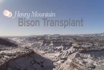 Henry Mountain Bison Transplant  The Utah Division of Wildlife Resources, in January 2009, moved 31 bison from the Henry Mountains to the Book Cliff region in Utah. This will become the fifth free-ranging bison herd in the United States.