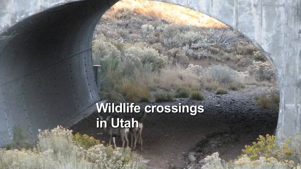 Wildlife crossings in Utah, best of photos from 2007–2015