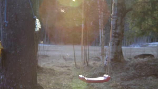 Mygg dansar i vårsolen - Gnats are dancing in a sunray in a garden