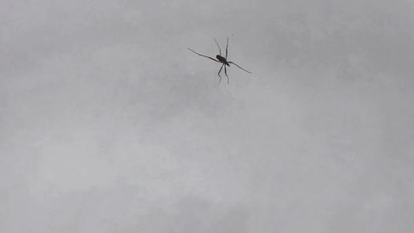 Ett små insekt jagar på snön -  Predatory bug stalking over  fresh snow