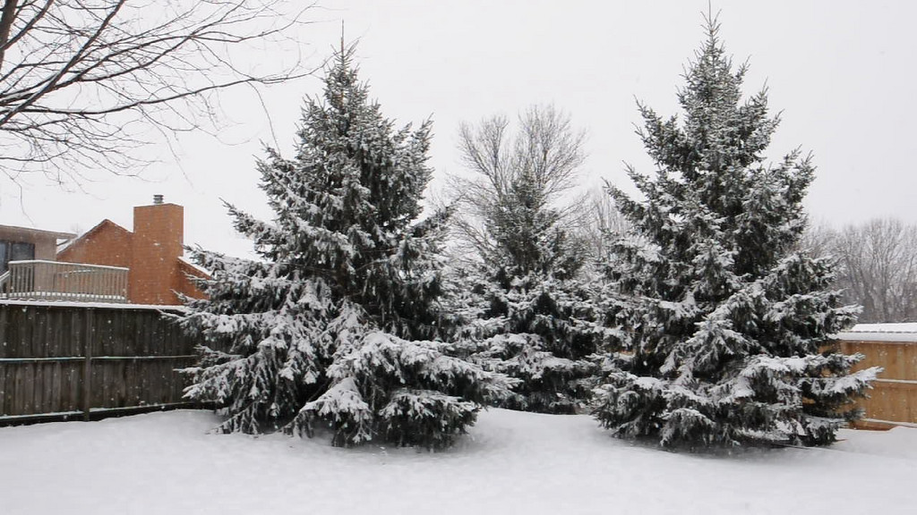Snow fall on Christmas Eve day.