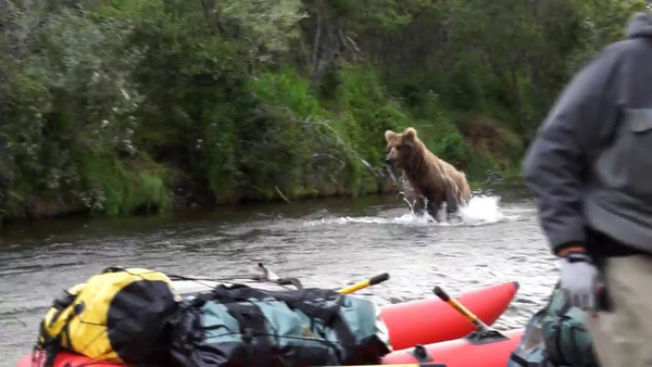 Grizzly Crossing in Alaska