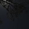 Birds of the Night
