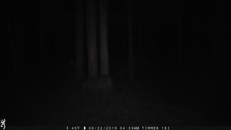 Untitled video