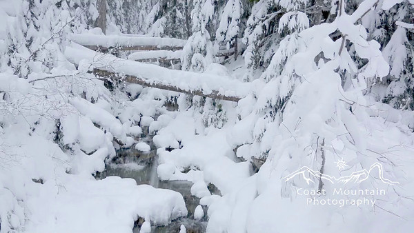 A snowy creek flowing under fallen trees in the forest on Blackcomb mountain Stock video footage by Mitch Winton - coastphoto.com