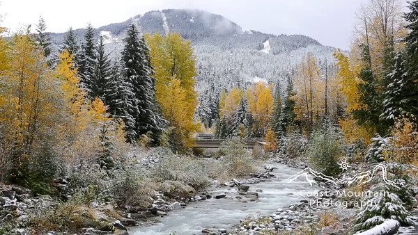 The Fitzsimmons Creek flowing through Whistler during during Fall.  Fall colours with a dusting of snow Stock video footage by Mitch Winton - coastphoto.com