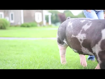 McKenzi Ferguson | #stockshowlifestyle - State Fair Edition FULL VIDEO