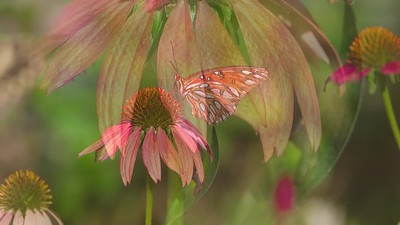2019 butterfly garden