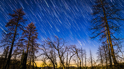 Star Trails at Evergreen Lodge (2/26/2016)
